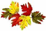Õszi Tölgy levelek