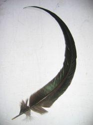 Kakasfarok toll 22-28 cm natúr