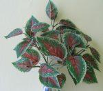Cserepes coleus (díszcsalán), 28 cm (mű)