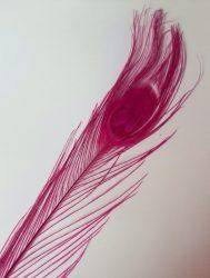 Pávatoll festett pink