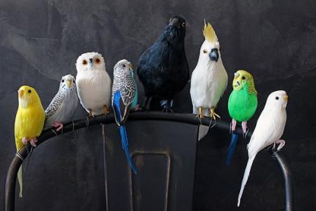 Tollas mű madarak és toll lepkék